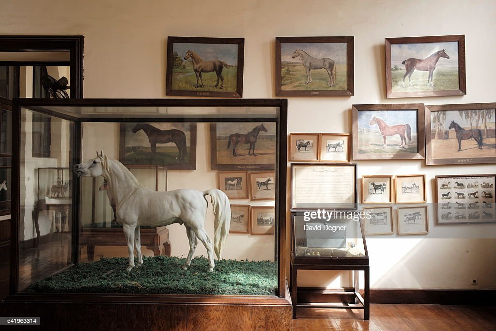 Models Of Different Types Horses And Stallions Stand In A Hall Dedicated To Farming History