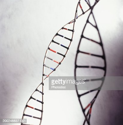 DNA models, (Close-up) : Stock-Foto