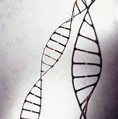 DNA models, (Close-up)