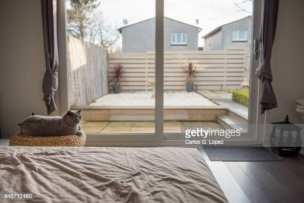Modern bedroom interior with a cat lying on a stool overlooking a zen garden