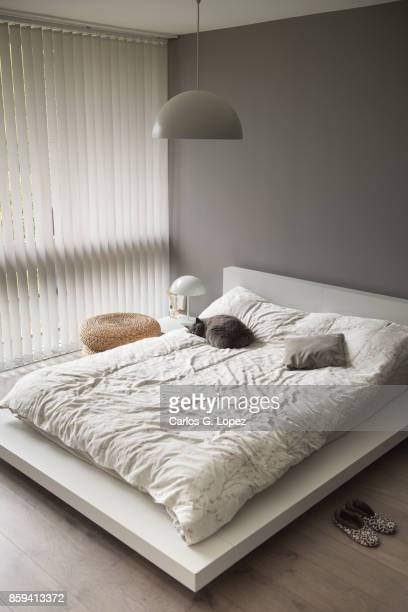 Modern Bedroom Interior with cat lying on bed under round lamp