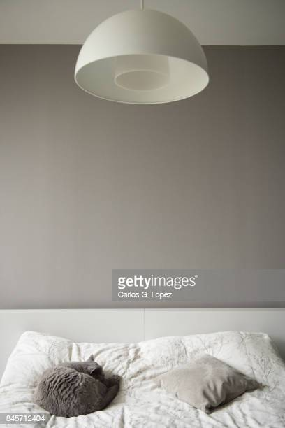 Modern bedroom interior with cat sleeping on bed under lamp