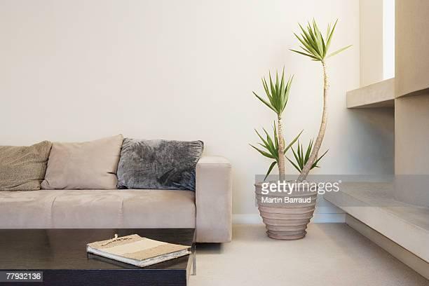 Salon moderne avec Plante en pot