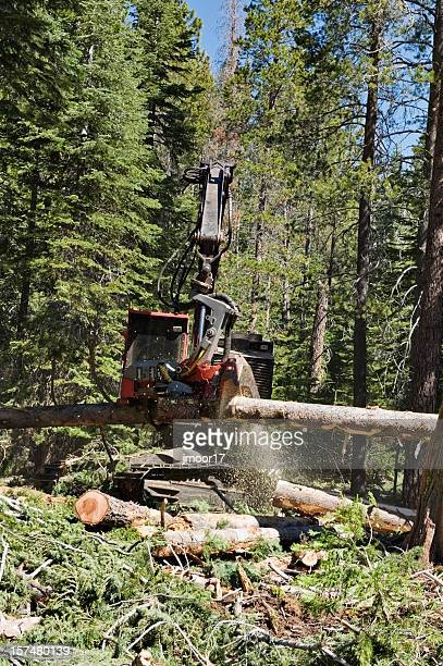 Modern Logging Equipment