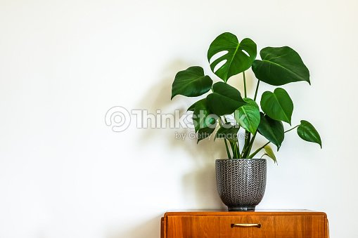 Modern retro interior with vintage table with a potted plant : Stock Photo