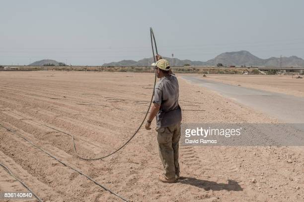 Mohammed of Morocco set drip irrigation lines as they prepare plots of lands to be farmed the next campaing starting by the end of September on July...