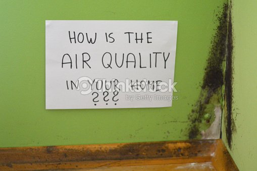 Mold and dust. : Stock Photo