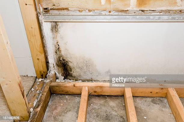 Mold growing in basement bathroom