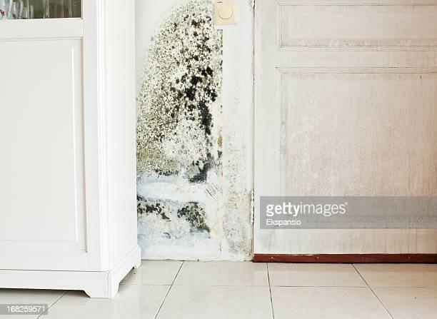 O crescimento do molde na parede e a porta de madeira húmido Manchado