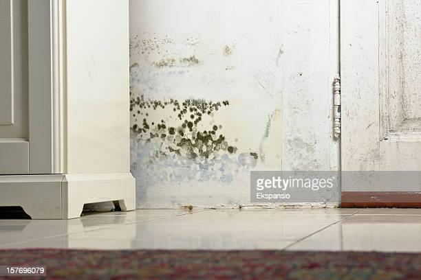 モールド・モウルドのシミ湿った壁とドアの後ろのキャビネット