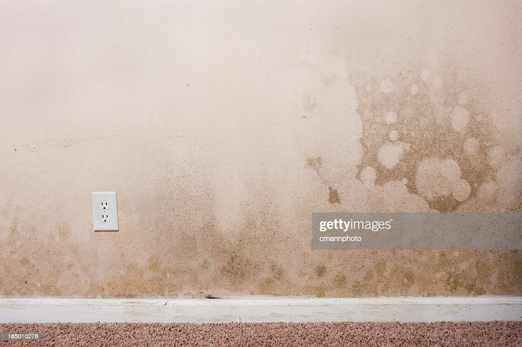 Mold on a wall in the interior of a home
