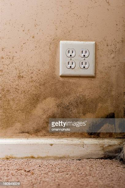 Mold on the wall and carpet of a house