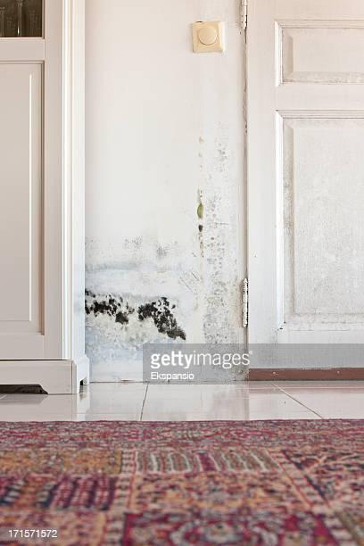 Moldy ・モウルドのシミ湿ったドアと壁の後ろのキャビネット