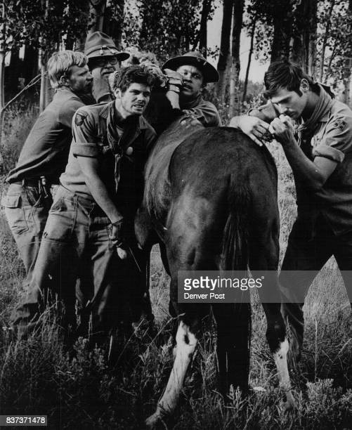 Molly the mule contracted an infection on hike and is doctored by members of the party From left are Sgt Michael Kelley Van Nuys Calif biting her...