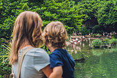 Mom and son are looking at the flock of birds of pink flamingos on a pond in Hong Kong Park.