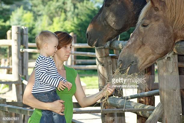 Mom and son feeding horses