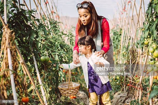 Mom & daughter picking tomatoes in farm