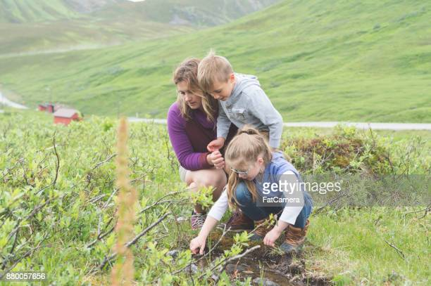 Mom looks for fish in a tiny Alaska stream with her. two children