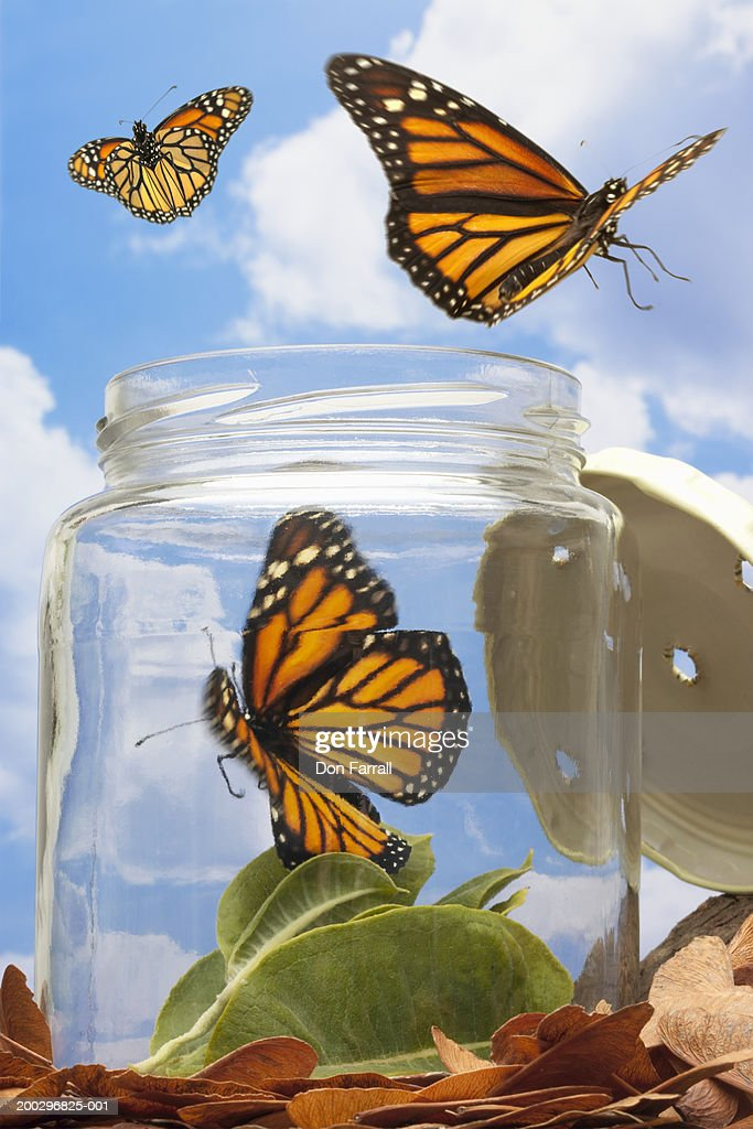 Monarch butterflies flying away - photo#14