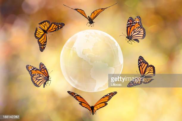 Monarch Butterfly around the World