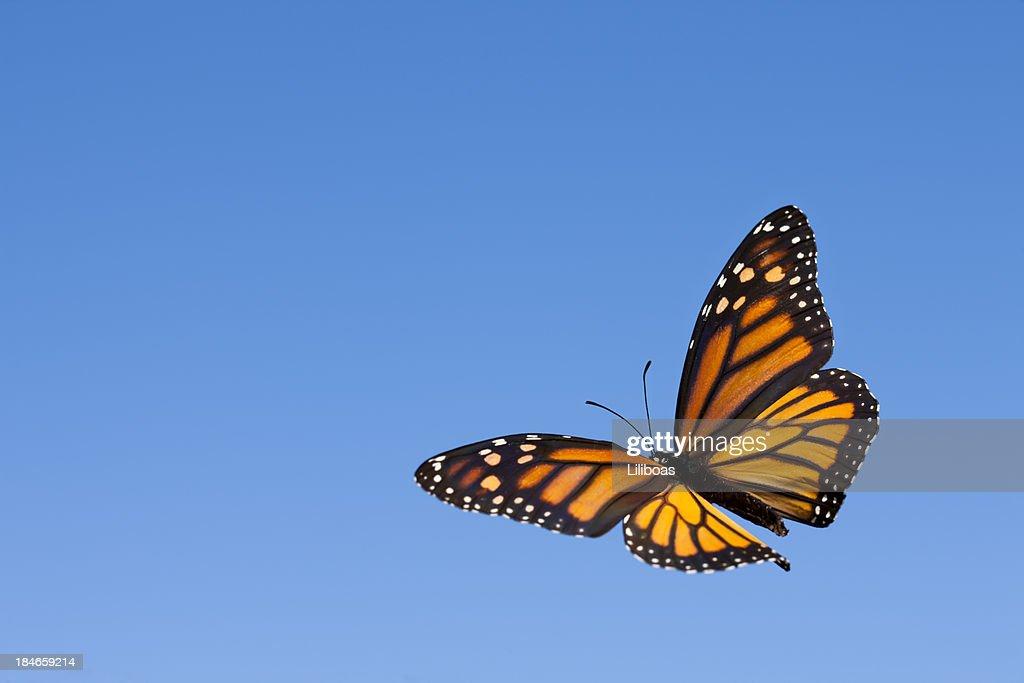 Monarch Butterfly in the Sky