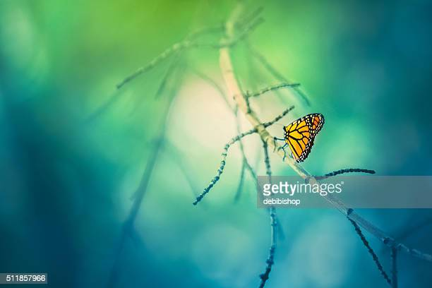 Monarch Butterfly On Tree Branch With Bokeh Background