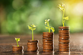 Money coin stack growing graph with tree top bokeh background,saving and investment concept