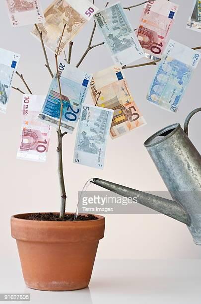 Money growing in a pot