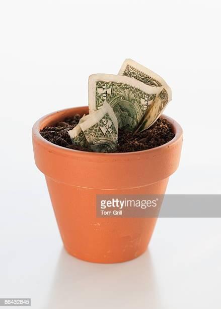 Money growing in terra cotta pot