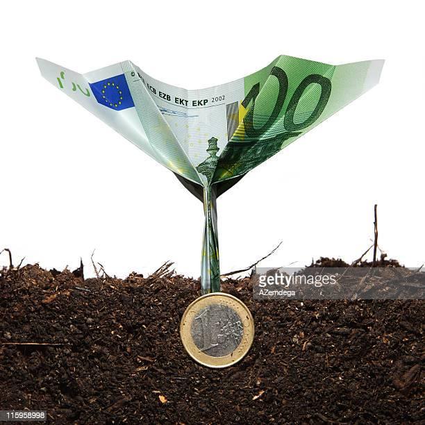 Geld plant 4