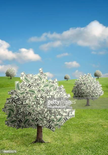 Albero di soldi campo