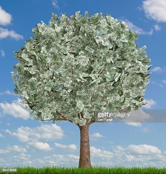 Money tree, full, sky background