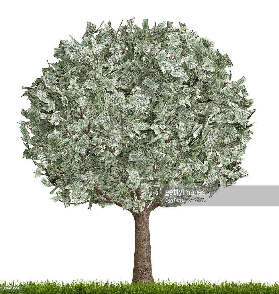 Money tree, full, white background : Stock Photo