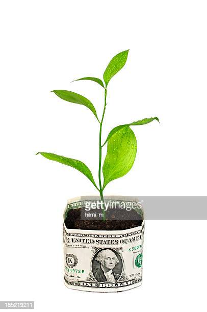 Money tree in bucket of Dollars