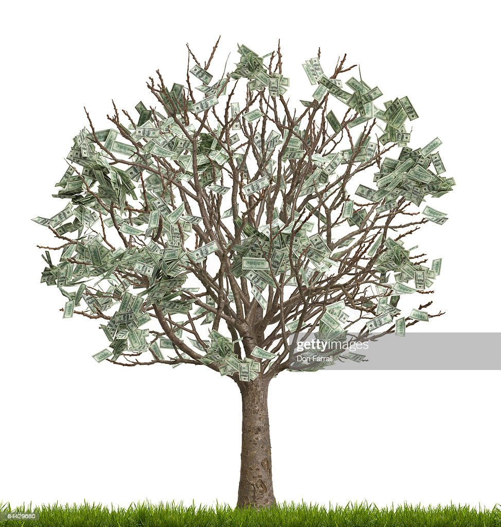 Money tree, number two in a series, white : Stock Photo