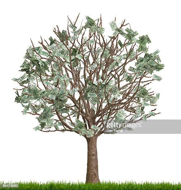 Money tree, number two in a series, white