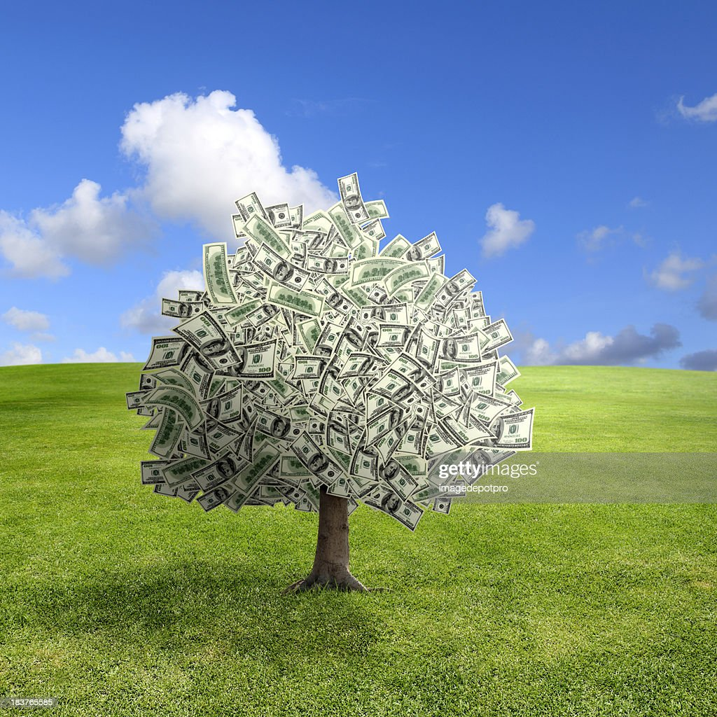 money tree on green landscape : Stock Photo
