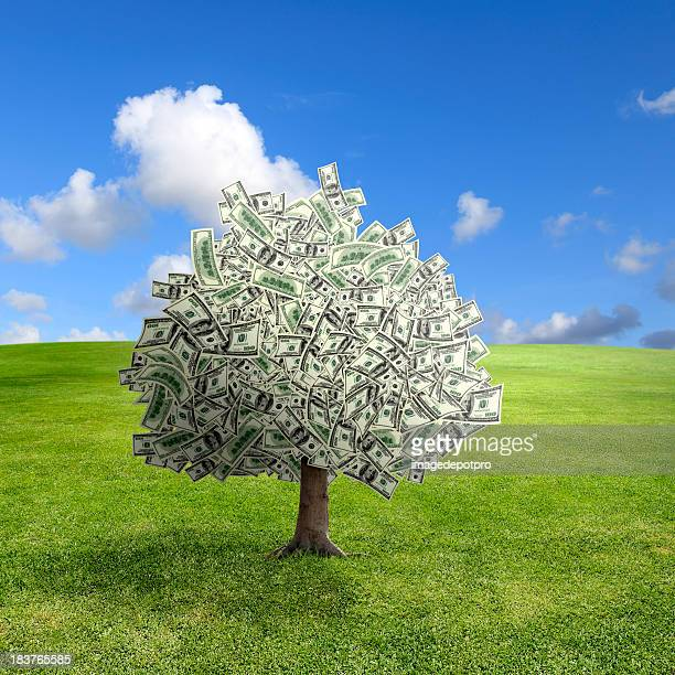 money tree on green landscape