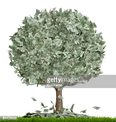 Money tree, overflowing, white background : Stock Photo