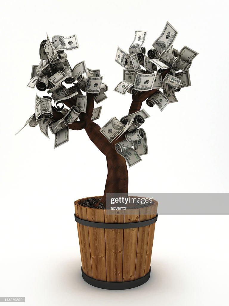 Money tree : Stock Photo