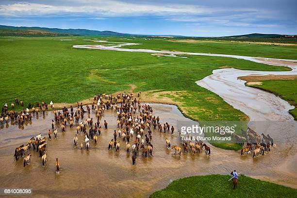 Mongolia, horse's herd, horserider