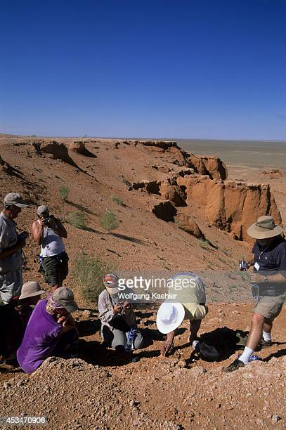 Mongolia Near Dalanzadgad Gobi Desert Bayanzag Flaming Cliffs Dr Badamgarav Excavating Dinosaur Egg