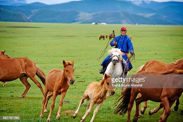 Mongolia, Ovorkhangai, Okhon valley, Nomad life
