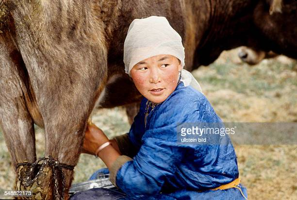 MNG Mongolia woman milking a cow in the Khoevsgoel province