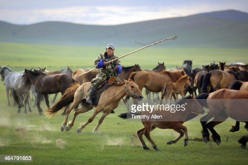 Mongolian herdsman chases foal with lasso