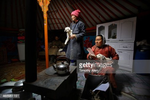 Mongolian nomadic women feed milk to lambs in ger