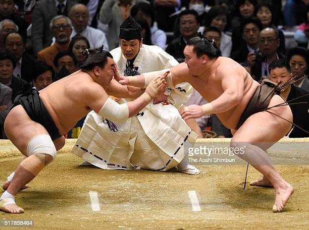 Mongolian yokozuna Hakuho and Harumafuji compete during day fifteen of the Grand Sumo Spring Tournament at the Edion Arena Osaka on March 27 2016 in...
