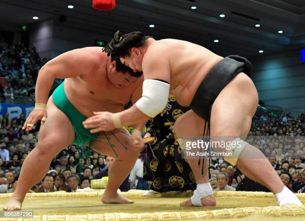 Mongolian yokozuna Harumafuji and Yoshikaze compete during day six of the Grand Sumo Spring Tournament at Edion Arena Osaka on March 17 2017 in Osaka...