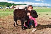 Mongolian young girl playing with yak