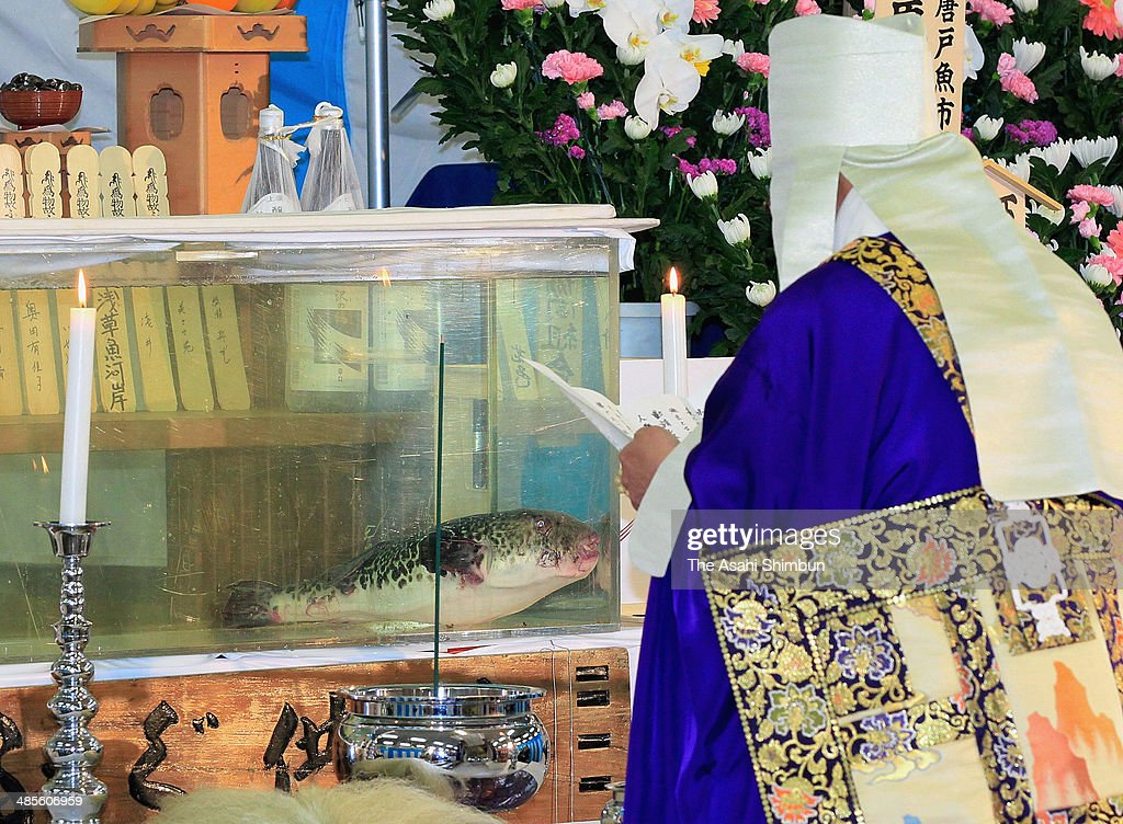 A monk chants Buddhist sutra in front of a water tank contains a big pufferfish during a pufferfish mass held at Tsukiji Fish Market on April 19, 2014 in Tokyo, Japan. As the best season of pufferfish almost finishes, the mass to appreciate the fish is held annually in April, 150 pufferfish traders and chefs participate in the 59th mass this year.
